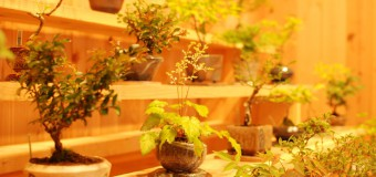 ミニ盆栽と器に特化した、盆栽屋さんのスタートアップ